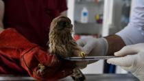 Bursa'da yavru kerkenez tedavi altına alındı