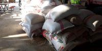 Buğdayın atası Bursa'da üretilecek